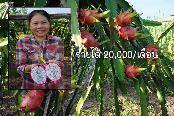 หนีกรุงมาทำการเกษตร รับรายได้งามๆ 20,000บาท/เดือน