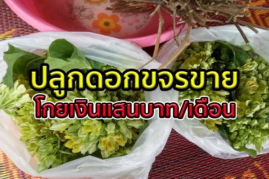 ดอกขจร