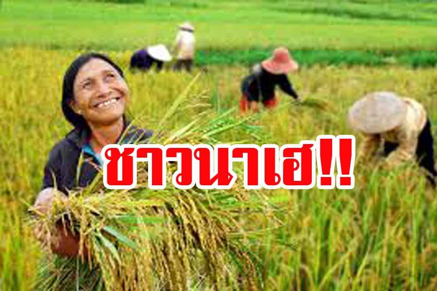 ชาวนาเฮ!! รัฐปรับเงื่อนไขสินเชื่อชะลอขายข้าวเปลือกนาปี ลดความเสี่ยงได้ประโยชน์เพิ่ม