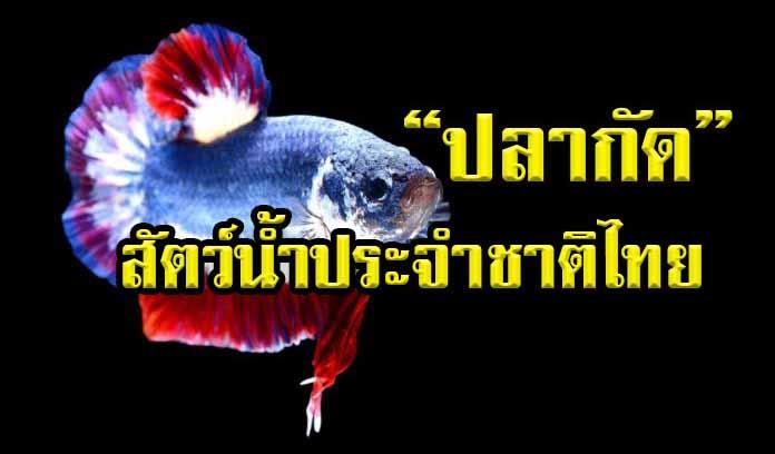 ปลากัดไทย