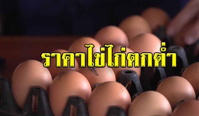 กรมการค้าภายใน เร่งแก้ปัญหาราคาไข่ไก่ตกต่ำ