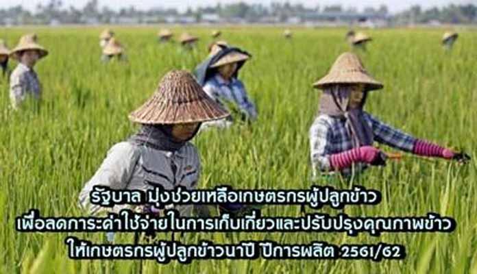 รัฐบาลช่วยเหลือเกษตรกรผู้ปลูกข้าวรายย่อยเพื่อบรรเทาค่าครองชีพ อย่างต่อเนื่อง