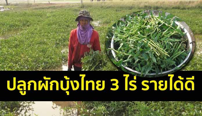 ชาวนายิ้มได้ แบ่งที่นา 3 ไร่ ปลูกผักบุ้งไทยช่วงหน้าแล้ง ทำเงินทุกวัน เดือนละเกือบ 4 หมื่น