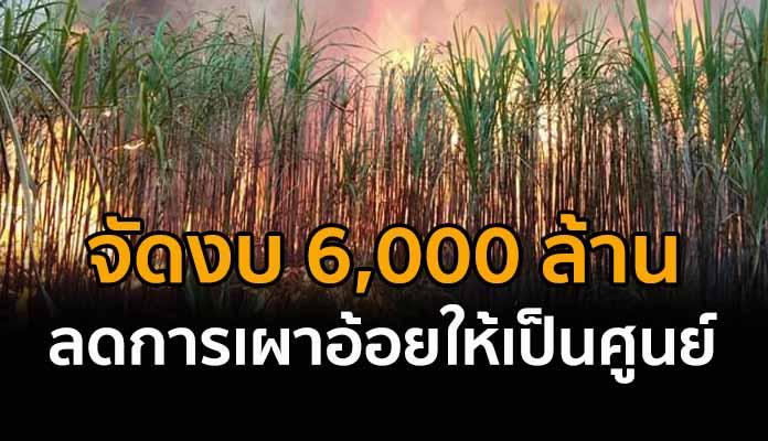 ครม.อนุมัติ 6,000 ล้าน ลดการเผา ตั้งเป้าลดการรับซื้ออ้อยไฟไหม้เข้าโรงน้ำตาลเป็นศูนย์ในปี 2565