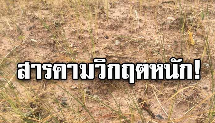 ภัยแล้ง! สารคามวิกฤตหนัก ไร้น้ำทำนา กระทบแล้ว 4 อำเภอ สูญรายได้ 400 ล้าน