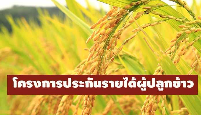 อธิบดีกรมการค้าภายใน ย้ำ! เกษตรกรต้องขึ้นทะเบียนเท่านั้น ที่จะได้รับประโยชน์ประกันรายได้ผู้ปลูกข้าว